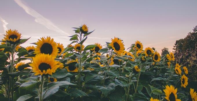 Are Sunflower Seeds Keto
